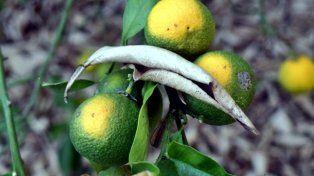 Por la sequía, Bordet declaró la emergencia agropecuaria