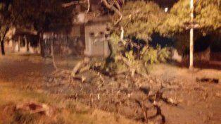 Un árbol cayó en calle Paraguay