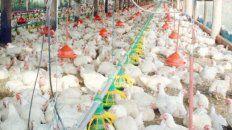 mas granjas avicolas obtienen la certificacion para poder exportar