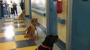 La foto de los perros esperando por entrar a las habitaciones se viralizó.