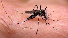 confirmaron un caso de dengue en gualeguaychu: un joven esta en terapia intensiva