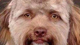 El mono y el perro con caras humanas conmueven a las redes sociales