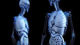 Los científicos continúan descifrando los secretos del cuerpo humano.
