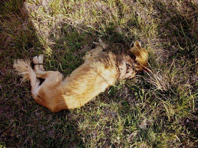 Murió el perrito que había sido abandonado con las patas precintadas