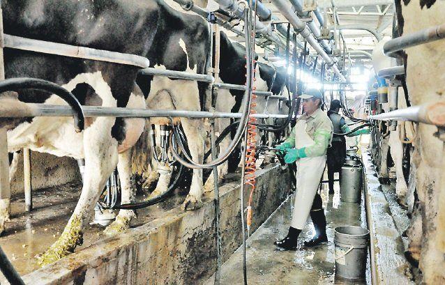 La producción lechera de Entre Ríos representa el 4% del mapa nacional. Igual hay más de mil tambos que generan trabajo.