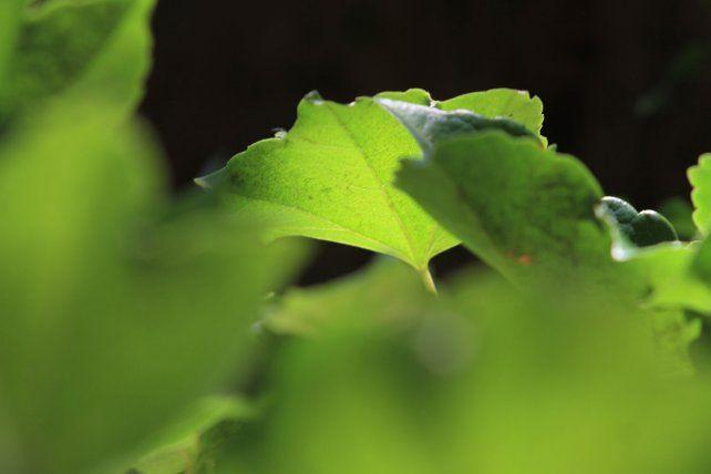 La Biodanza vuelve a explorar para potenciar el instinto. Foto UNO Juan Ignacio Pereira.
