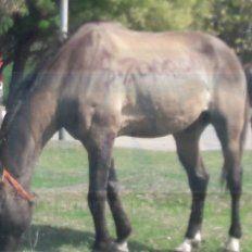 Como un auto. El caballo fue expuesto en el paseo ubicado en la zona oeste de Paraná.