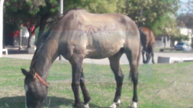 Como un auto. El animal fue expuesto en el paseo ubicado en la zona oeste de la capital provincial.