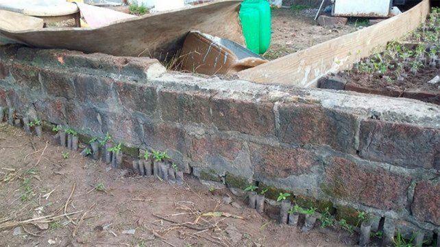 Estructura armada. En el predio había tapialitos para proteger a las 3.285 plantas de marihuana.