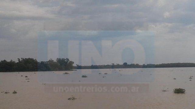 Miles y miles. Los camalotes salieron de los arroyos y ganaron el río Paraná.