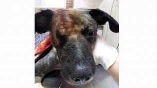 De pelos: Huellitas realizará un evento para cubrir gastos de animales rescatados