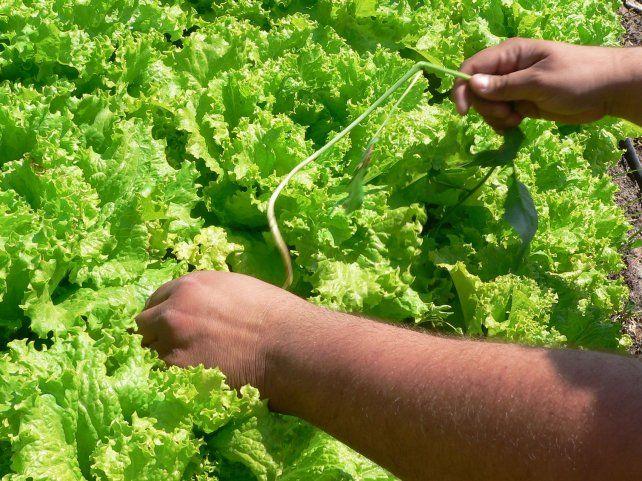Opción. Cada vez hay más mercados donde se pueden adquirir verduras y otros productos no industrializados.