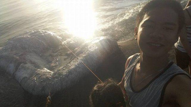 Encontraron una horrible criatura en una playa de Filipinas