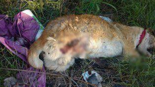 Encontraron un perro horriblemente mutilado en la zona oeste de Paraná