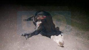 Senador de Cambiemos se accidentó al chocar una vaca