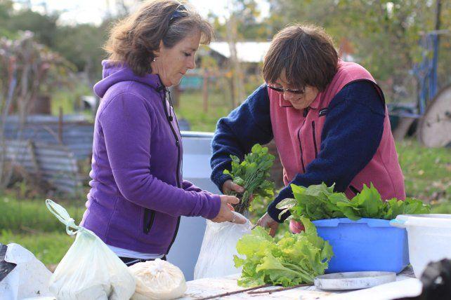 Comprando verduras frescas a la persona que la cosechó. Ideal.