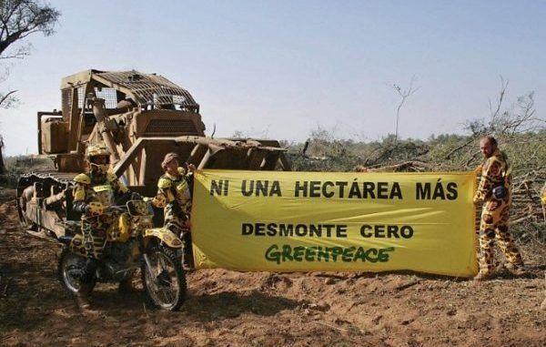 Greenpeace denunció ante la CIDH amenazas de allegados al Gobierno tras denuncias por desmontes