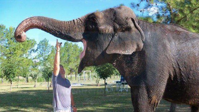 Historia. Merry es una elefanta de origen asiático