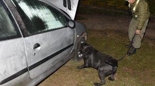Uno de los perros de gendarmería en acción.