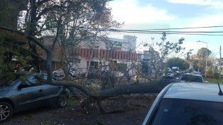 Susto a la tarde. El árbol cayó sobre el VW estacionado.