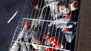 Cardenales rojos. Los pájaros habrían sido cazados en montes de la zona.