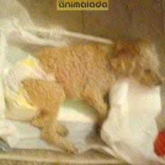 Ayudemos a Rolo. Fue rescatado y enfrenta una difícilrecuperación.