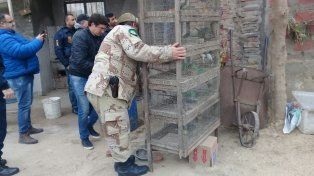 En una casa tenían una gran jaula con 1.000 aves autóctonas en cautiverio
