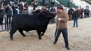 El primer toro que ingresó a la Rural se llama Mbappé
