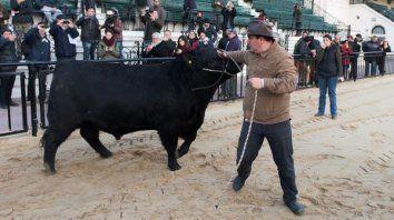 el primer toro que ingreso a la rural se llama mbappe