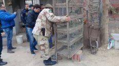 el trafico ilegal de aves mueve unos 600 millones de pesos en la provincia