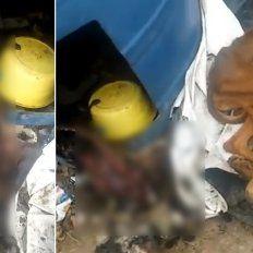 Salud Animal Municipal desmintió un video del matrato a perros que circula en las redes