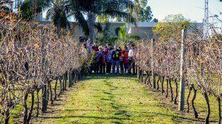 Recorridas guiadas por los viñedos entrerrianos
