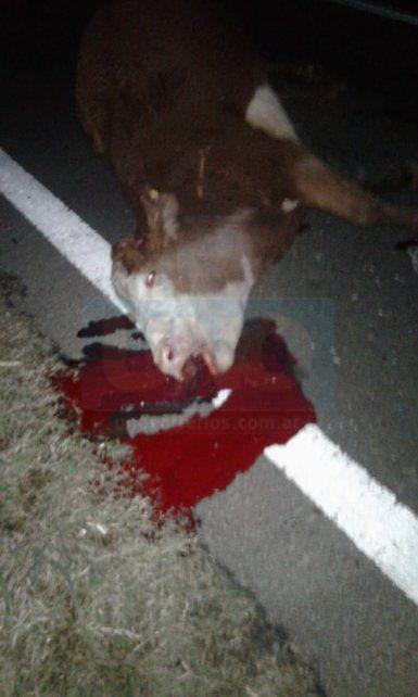 Una vaquilla sobre la ruta provocó un tremendo triple choque
