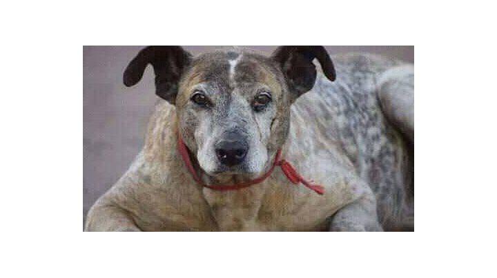En memoria de Cica, el perrito peregrino que se aquerenció en peatonal San Martín