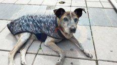 en memoria de cica, el perrito peregrino que se aquerencio en peatonal san martin