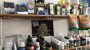 Lo que dejó el operativo en el comercio donde se cultivaba cannabis y se detuvo a un hombre