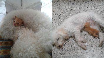 Eleno dormía y tomaba la teta de Camila.