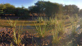 El principal reservorio de killis del país está en Entre Ríos y buscan protegerlo