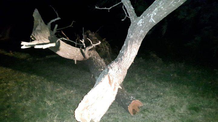 Un peligro. El árbol se desparramó sobre una parte de la ruta 12