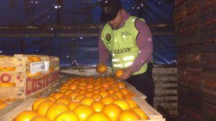 Realizan controles sanitarios para certificar la existencia de HLB en los citrus