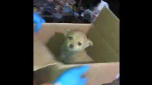 Recolectores rescataron un cachorrito de un camión compactador