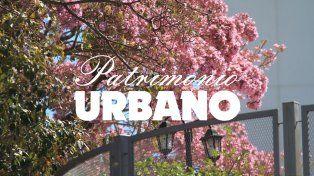 Los árboles de Paraná (primera parte)