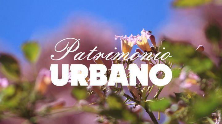 Los árboles de Paraná (segunda parte)
