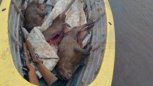 Para consumo. Los animales fueron faenados para alimento de una familia.