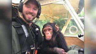 Rescatado de cazadores furtivos, bebé chimpancé enternece copilotando una avioneta
