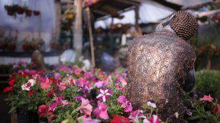 Opciones en plantas de interior y exterior, diseños de jardín y el auge de las aromáticas
