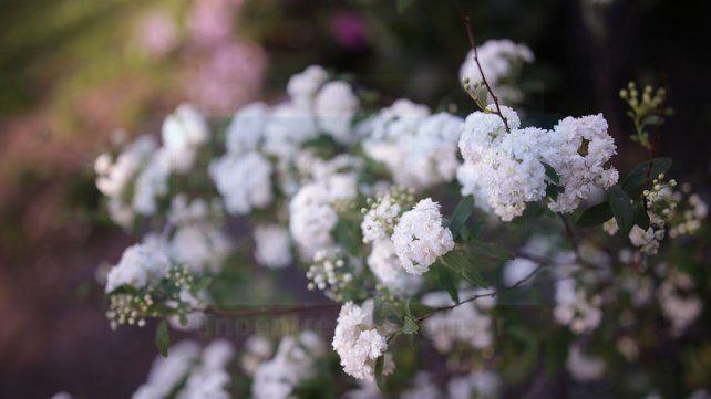 <p></p>La Primavera es la estación de los colores. Para las plantas es época de fiesta.  <p></p>