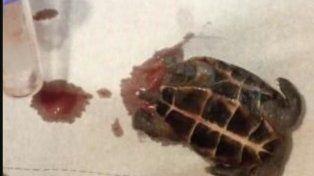 Salió de fiesta, fue al médico y le sacaron una tortuga muerta de la vagina