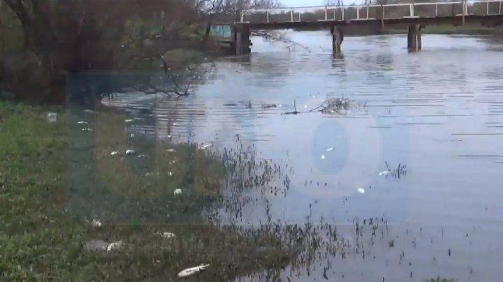 Vecinos de San José piden explicaciones por una grave mortandad de peces