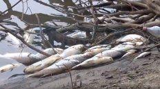 vecinos de san jose piden explicaciones por una grave mortandad de peces